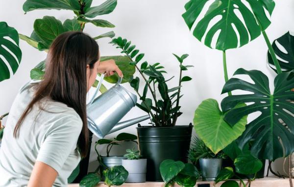 راهنمای کامل نگهداری گیاهان آپارتمانی از مبتدی تا حرفه ای