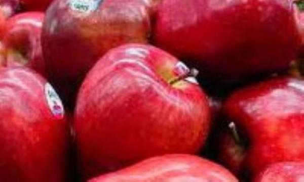 سیب را جدی بگیرید